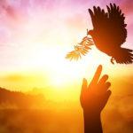 Renovamento Carismático Católico promove Seminários Online