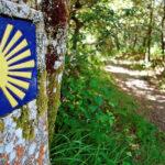 Caminhos de Santiago: «Falta a aposta num itinerário espiritual, em Portugal» – padre Francisco Mendes