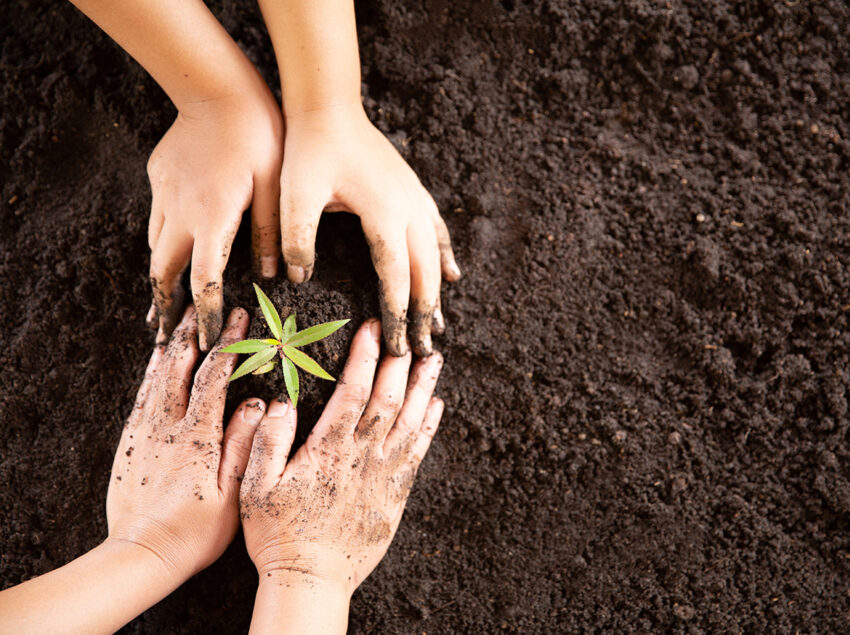Child hands holding and caring a young green plant, Seedlings ar